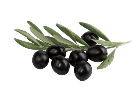 rama de olivo: rama de olivo con aceitunas negras sobre fondo blanco aisladas Foto de archivo