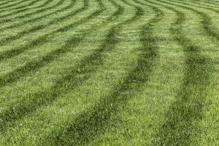 cut grass: lawn with freshly cut grass Stock Photo