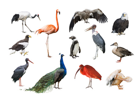 A collage of birds from different continents Stok Fotoğraf