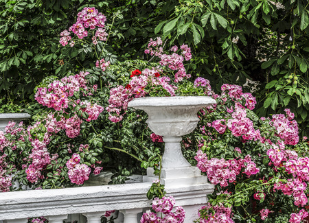 balustrades: landscaping in the summer park with a park architecture and roses