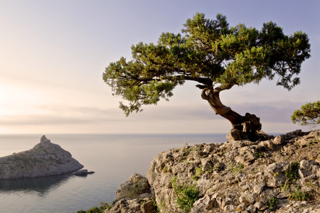 Beautiful summer landscape - a lone pine tree growing on the slope of the mountain in the Crimea, on the background of blue sky and sea
