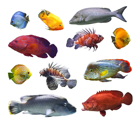 Collage of sea and river fish isolated on white background