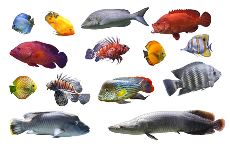Collage of sea and river fish exotic fish on white background isolated close-up