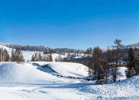 Beautiful winter landscape, mountains covered with snow, forest, a herd of horses in the distance on a sunny frosty day Standard-Bild