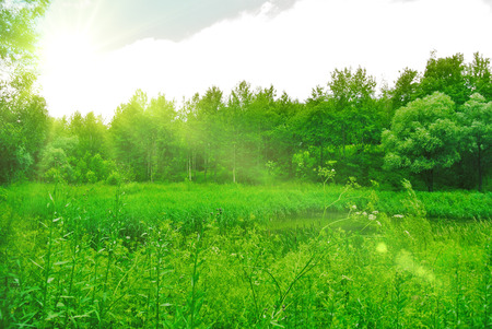 Deep spring forest with a sunny day with a bright green foliage under the rays of the Sun.