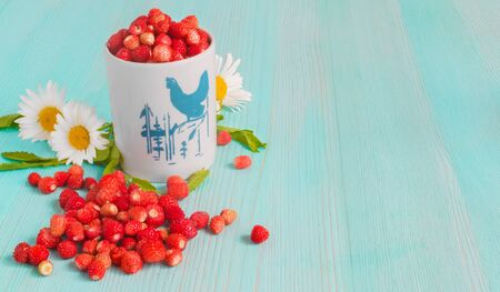 Ripe strawberries with plant leaves on blue wooden background, strawberries in white old mug, healthy food concept. close up. copy space. selective focus 写真素材