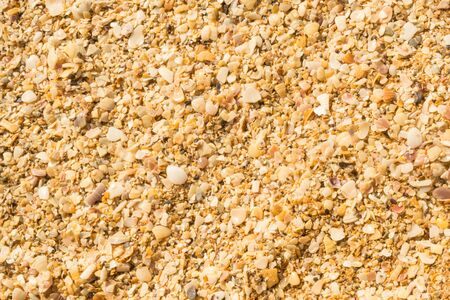 Summer beach. Rest. Yellow sand and small shells. Texture. background. Wallpaper. Close up