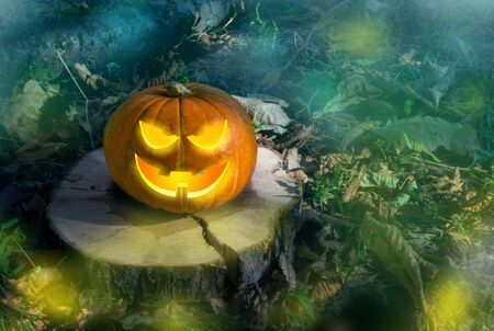 Halloween pumpkin on the ground at night in a mystical forest. Halloween background. Sinister eyes of pumpkins. Halloween party.Autumn festival. Magic. The inscription on the tree log. selective focus