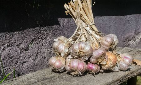 Fresh raw organic vegetables in the garden, Ripe garlic in a large bundle.The concept of autumn vegetables. Harvest. Gardening. Fruits and vegetables. Ingredients from healthy food.close up Imagens