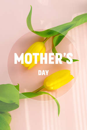 Mothers day.Tulip flower with petals on pink background.Womens day.love.postcard.Banner.Advertising for the store and holiday sale.flat lay.vertical