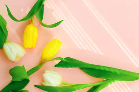 Mothers day.Tulip flower with petals on pink background.Womens day.love.postcard.Banner.Advertising for the store and holiday sale.copy space.mock up.flat lay.
