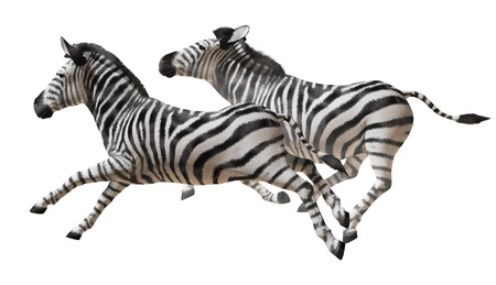 Isolated image of zebras running on a white background Banco de Imagens