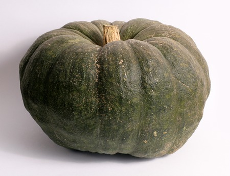 Green pumpkin for Halloween isolated on a white background