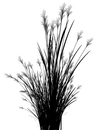 grass blades: Field grass on a white background isolated 3d illustration Stock Photo