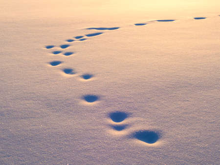 animal tracks: Animal tracks in snow, natural background