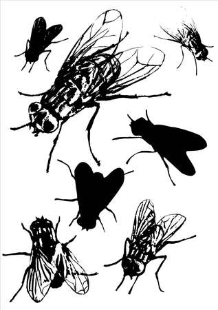 fly collection.This image is a vector illustration and can be scaled to any size without loss of resolution. Stock Vector - 5180785