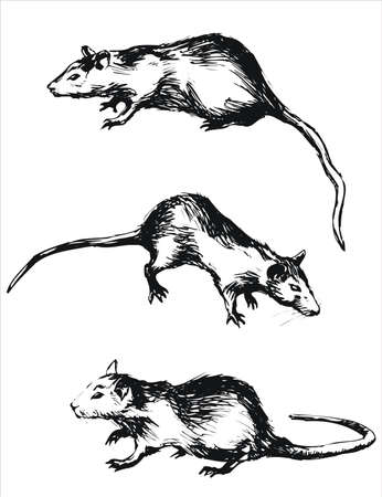 rat.This image is a vector illustration and can be scaled to any size without loss of resolution.