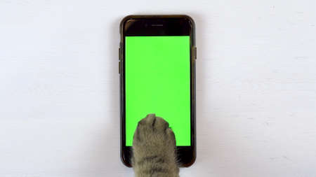 The cat uses a phone. Close-up of cats paw typing on the smartphone. Phone with a green background.