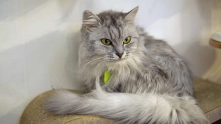A gray cat sits against a wall on a playground. The cat sits quietly and looks away.