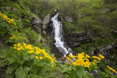 The cascade of the mountain river and yellow flowers. Stock Photo