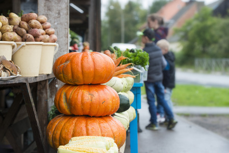 people choose a pumpkin in the market in the village Standard-Bild