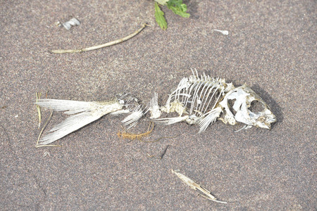 thrown on the sandy shore of the Bay the fish died in the sun Standard-Bild