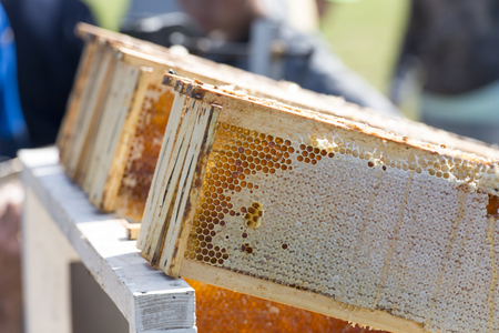 honeycomb in the frame with honey in the apiary, natural honey