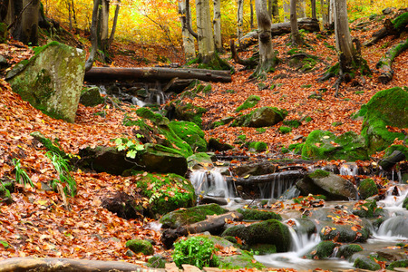 Stream in autumn beech forest in the Carpathians.