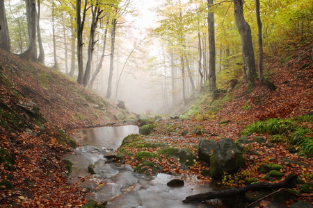 Stream in beech forest in a golden autumn in the Carpathians.