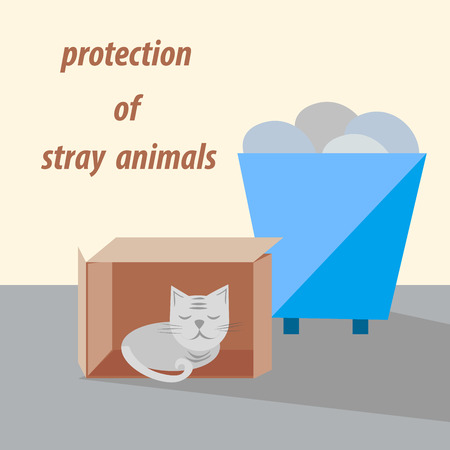protection of stray animals, cat on the street