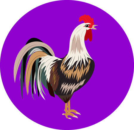 chicken is a poultry, on purple background