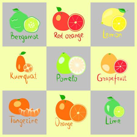 set of citrus fruits  on yellow background, vector illustration, Illustration