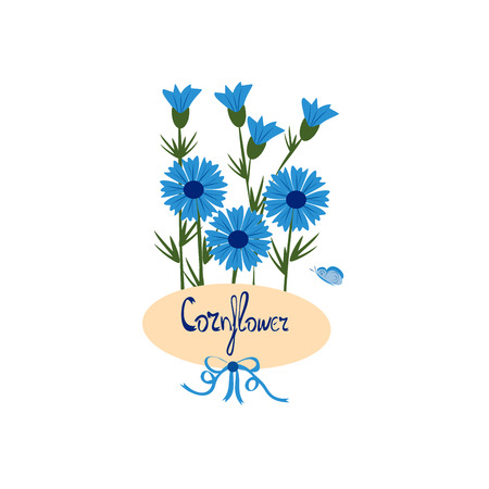 blue cornflowers on a white , vector illustration