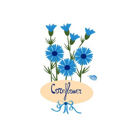 blue cornflowers on a white , vector illustration