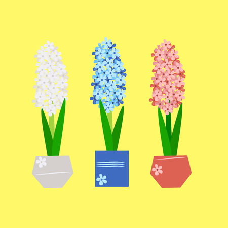 hyacinth - spring flowers in a vase on yellow background, vector illustration