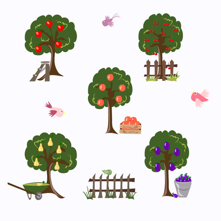 set of garden trees and fruits on a white background, vector illustration