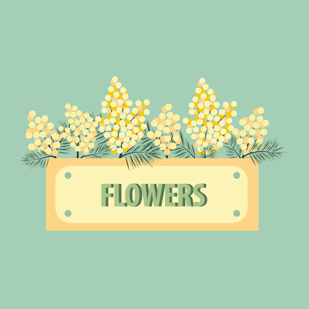 yellow mimosa on green background, vector illustration Illustration