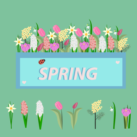 flowers of spring  on green background, vector illustration
