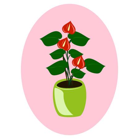 houseplant - anthurium on pink background.vector illustration