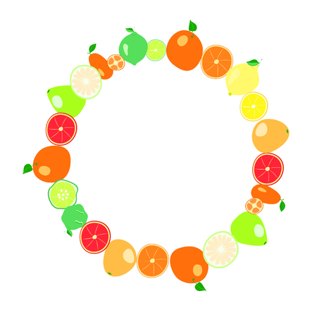 citrus fruits on a white background. vector illustration