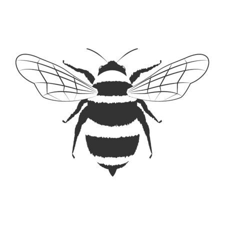 Lovely simple design of a white and black bee on a white background