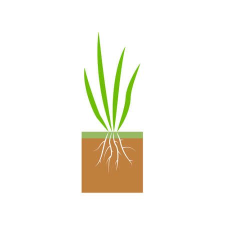 Plant with roots. Lawn aeration stage illustration. Lawn grass. Process of aeration isolated on white background. 向量圖像