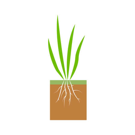 Plant with roots. Lawn aeration stage illustration. Lawn grass. Process of aeration isolated on white background.  イラスト・ベクター素材