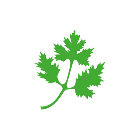 Coriander icon. Green parsley leaves vector illustration isolated on white. Cilantro symbol.