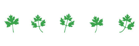 Coriander green icon set. Parsley leaves vector illustration isolated on white. Cilantro symbol collection.