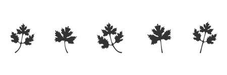 Coriander black icon set. Parsley leaves vector illustration isolated on white. Cilantro symbol collection.