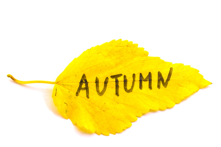 Yellow leaves with an inscription Autumn on an isolated white background