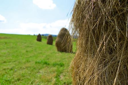 plenty hayrick on the green field