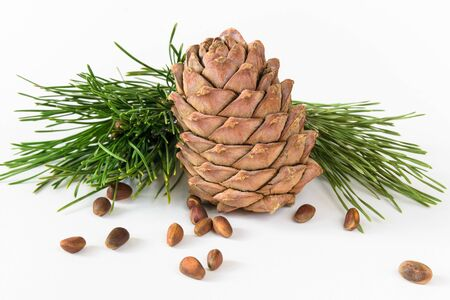 isolate, composition, pine cone, nuts and cedar branch on a white background Stok Fotoğraf - 133230485