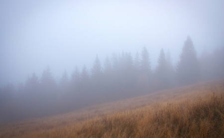 Autumn Trees in the Fog. Stock Photo